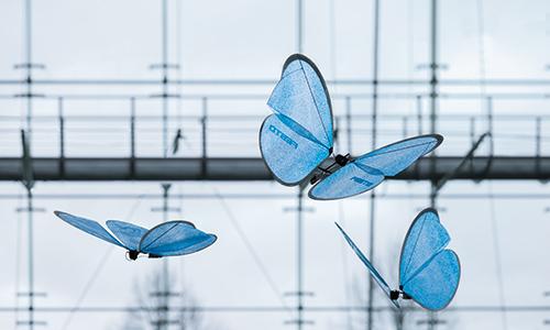 01_eMotionButterflies
