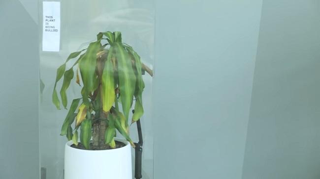 parlez vous gentiment aux plantes. Black Bedroom Furniture Sets. Home Design Ideas