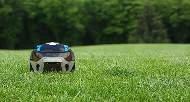 kobi-grass