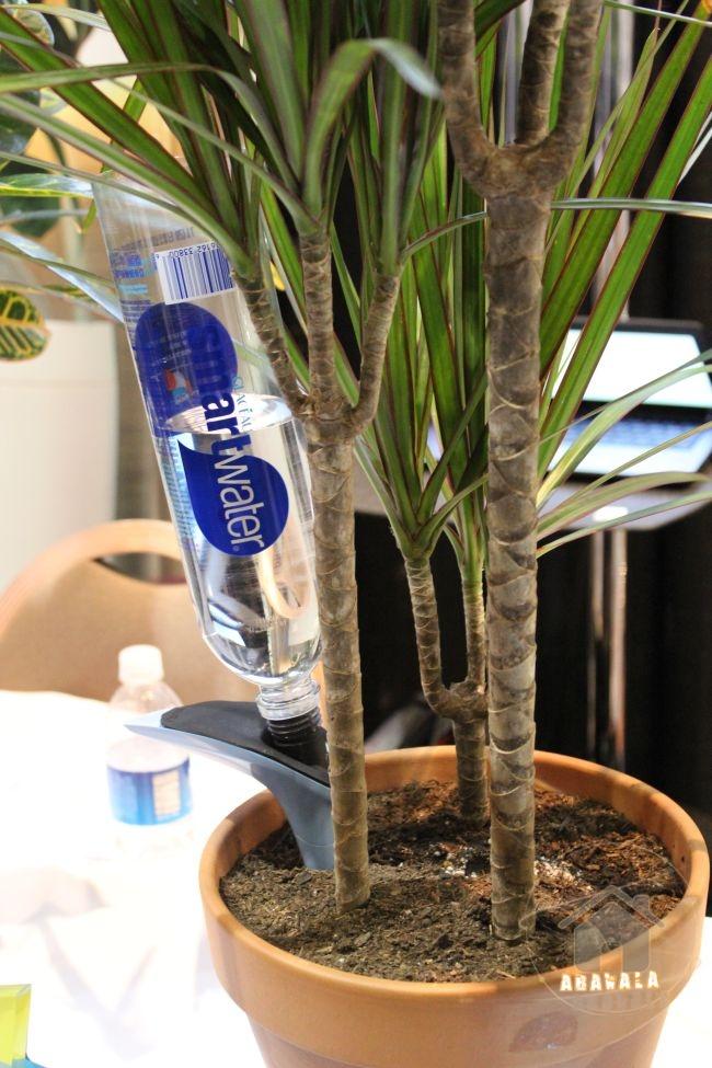 parrot-h2o-plante